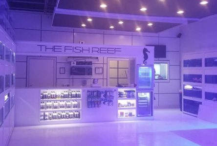 "Mode Aquariums and Customer's vision of ""Apple style"" reef aquarium store come to life!"